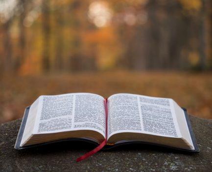 Life After Fruitfulness – Part 1